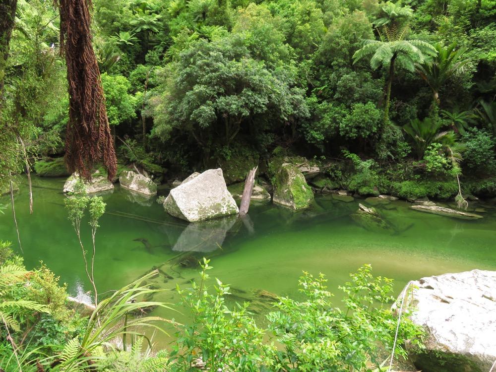 Pororari River Walk 04